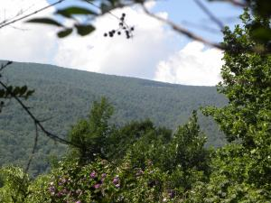 Kilby You can see Skyline Drive from Old Ski Lodge Lane 2011